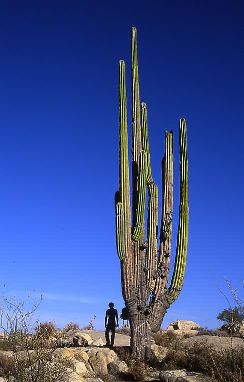 big_cactus